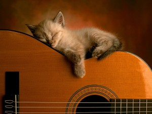 Kitten sleeping on guitar